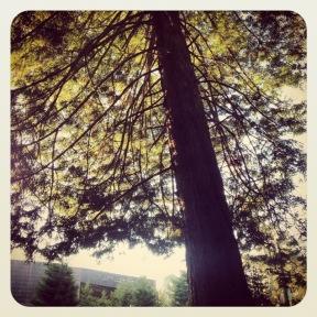 Golden Gate Park: the deYoung