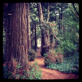 Golden Gate Park: Redwood Grove