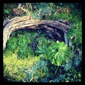 Golden Gate Park: Succulents
