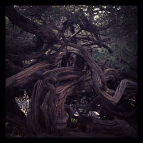 Golden Gate Park: Tangled