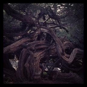 Golden Gate Park: Tangled