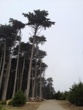 Presidio: Ridge Trail