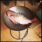 fish.cooking