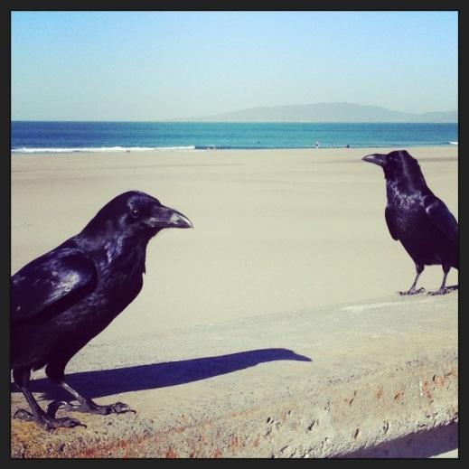 oceanbeach.crows
