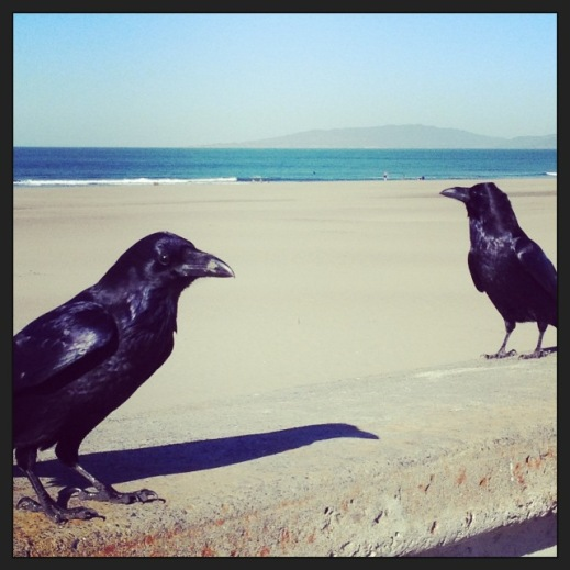 oceanbeach.crows