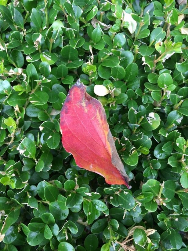 leaf-768x1024